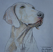 Dog Print Pastels Framed Prints - Weimaraner Dog Framed Print by Jose Valeriano