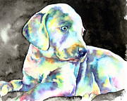Black Background Paintings - Weimeraner Puppy by Christy  Freeman