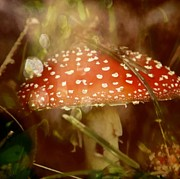 Magic Mushroom Prints - Welcome To Wonderland Print by Odd Jeppesen