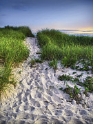 Footprints Photo Prints - Wellfleet Beach Path Print by Tammy Wetzel
