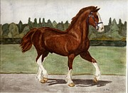 Cobb Originals - Welsh Cobb Stallion by Joan Pye