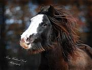 Gypsy Prints - Welsh Sophie Gypsy Mare Print by Terry Kirkland Cook