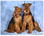 Pups Digital Art - Welsh Terrier pups by Maxine Bochnia