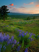 Lupine Framed Prints - Wenas Valley Sunset Framed Print by Mike  Dawson