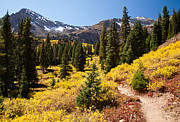 Fall Aspen Originals - West Elk Trail by Adam Pender
