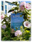 Provincetown Posters - West End Hollyhocks Poster by Tammy Wetzel