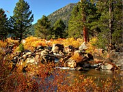 Pass Posters - West Fork of the Carson River Fall Colors Poster by Scott McGuire