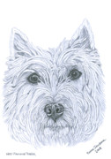 Eyes Detail Drawings - West Highland Terrier by Yvonne Johnstone