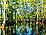 Louisiana Swamp Photos - West Monroe Cypress Swamp by Ester  Rogers