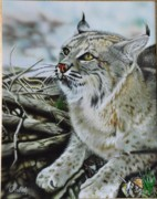 Bobcat Paintings - West Texas bobcat by Rebel Dowdle