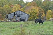 Virginia Ruins Photos - West Virginia barn 3214 by Michael Peychich