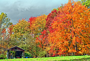 Shed Prints - West Virginia Maples 2 Print by Steve Harrington