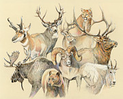 Elk Wildlife Prints - Western heritage Print by Steve Spencer