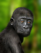 Animals Digital Art Posters - Western Lowland Gorilla Baby Poster by Julie L Hoddinott