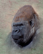 Western Digital Art Posters - Western Lowland Gorilla Poster by Betty LaRue