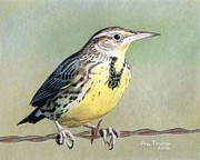 Wire Drawings Prints - Western Meadowlark Print by Ana Tirolese