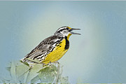 Meadowlark Digital Art Posters - Western Meadowlark Poster by Betty LaRue