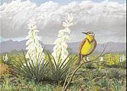 Meadowlark Paintings - Western Meadowlark by Don Lindemann
