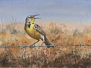 Feather Painting Acrylic Prints - Western Meadowlark Acrylic Print by Sam Sidders