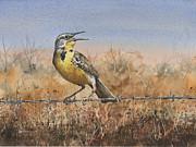 Western Meadowlark Print by Sam Sidders