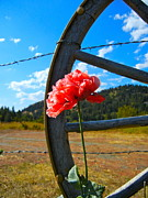 Barbed Wire Fences Photos - Western Sky by KD Johnson