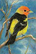 Tanager Originals - Western Tanager by Grace Goodson