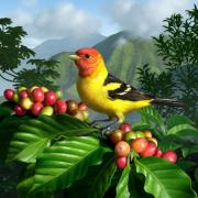 Coffee Beans Posters - Western Tanager Poster by Jerry LoFaro