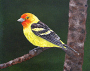 Tanager Originals - Western Tanager by Laura Savi
