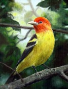 Tanager Originals - Western Tanager by Ma Ly