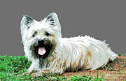 Puppies Digital Art - Westie by Dorrie Pelzer