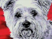 Dream Animal Prints - Westie Print by Luis Ludzska