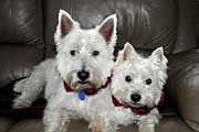 Westie World Print by Geraldine Alexander