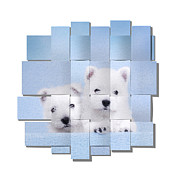 Maltese Photos - Westies blue mesh by Waldek Dabrowski