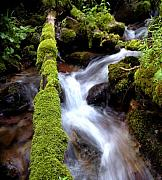 Creeks Prints - Wet and Green Print by Steven Milner