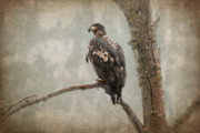 Eagle Metal Prints - Wet n Wild  Metal Print by Reflective Moments  Photography and Digital Art Images