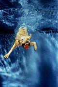 Diving Dog - Wet Paws by Jill Reger