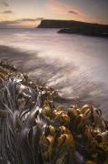 Curio Art - Wet Seaweed Along The Shore Curio Bay by David DuChemin