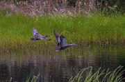 Wetland Wonders Iv Print by Dave Kelly