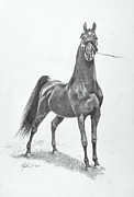Horse Drawings Posters - WGC Night Prowler Poster by Jeanne Newton Schoborg