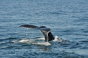 Whale Photo Originals - Whale Watch by Renata Zau