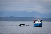 Whale Watching Prints - Whale Watching Print by Darcy Michaelchuk