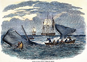 Ocean Ship Prints - Whaling In South Pacific Print by Granger