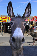 Donkey Digital Art Metal Prints - What . . . No Carrots Metal Print by Mike McGlothlen