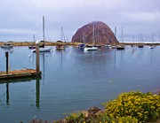 Morro Bay Posters - What A View Poster by Heidi Smith