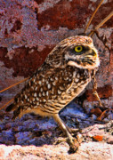 Owl Photo Metal Prints - What Big Eyes I Have Metal Print by Joetta West