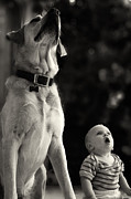 Labrador Retriever Photos - What Is That by Stylianos Kleanthous