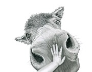 Baby Donkey Drawings Framed Prints - What Jesus Saw Framed Print by Linda Bissett