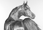 Thoroughbred Drawings - What? by Sue  Miles