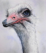 Ostrich Painting Framed Prints - What Your Problem? Framed Print by Sonja Guard