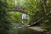 Lush Green Framed Prints - Whatcom Falls Bridge Framed Print by Idaho Scenic Images Linda Lantzy